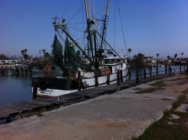 Texas Brown Shrimp in South Padre and Port Isabel (5/6)
